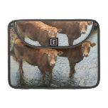 Cows in Devon field, UK MacBook Pro Sleeves