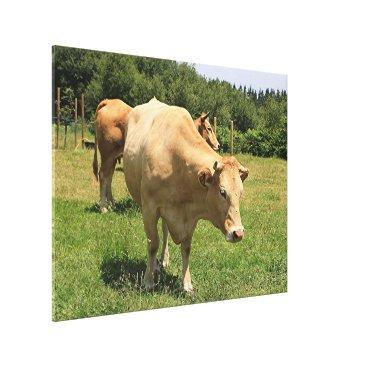 franwestphotography Cows in field, El Camino, Spain 2 Canvas Print