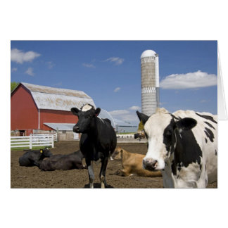 Cows in front of a red barn and silo on a farm 2 card
