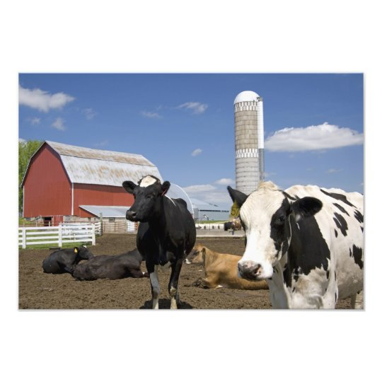Cows in front of a red barn and silo on a farm 2 photo print