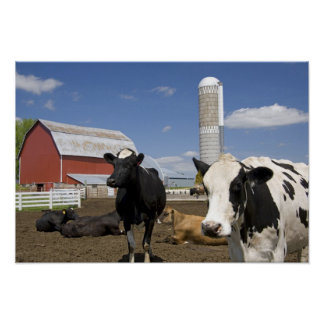 Cows in front of a red barn and silo on a farm 2 poster
