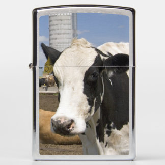 Cows in front of a red barn and silo on a farm 2 zippo lighter