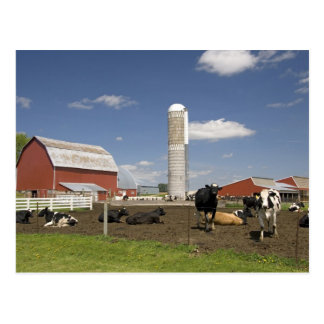 Cows in front of a red barn and silo on a farm postcard