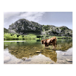 Cows in Lakes of Covadonga, Asturias Postcard