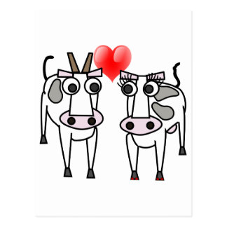 Cows in Love Postcard