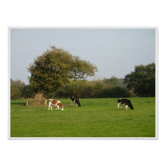 Cows in Nature Poster