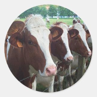 Cows in Row Round Sticker
