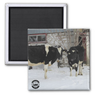 Cows in Snow Magnet