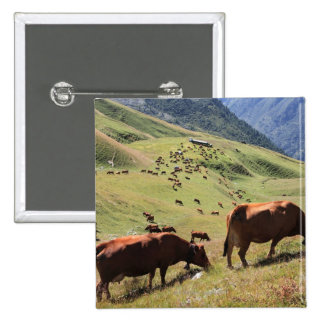 cows in Tarentaise Valley - Tarine race 2 Inch Square Button