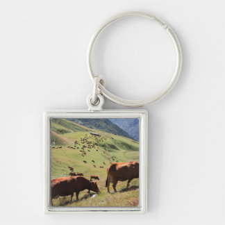 cows in Tarentaise Valley - Tarine race Silver-Colored Square Keychain