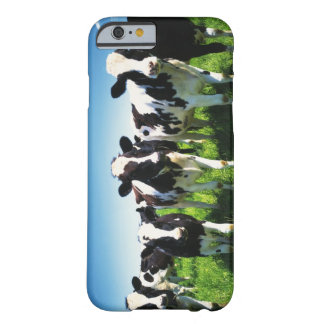 Cows in the field, Betsukai town, Hokkaido Barely There iPhone 6 Case