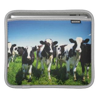 Cows in the field, Betsukai town, Hokkaido iPad Sleeves