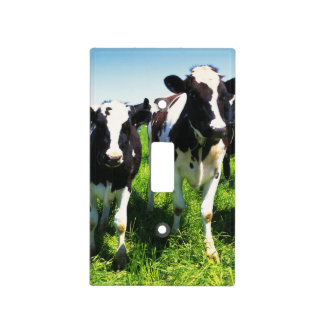 Cows in the field, Betsukai town, Hokkaido Light Switch Cover