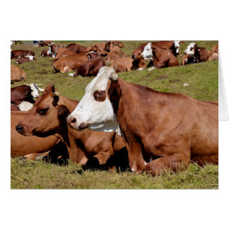 Cows in the French Alps Card