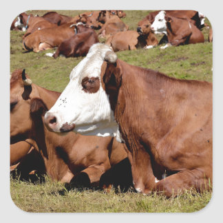 Cows in the French Alps Square Sticker