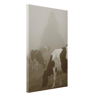 Cows in the mist canvas print