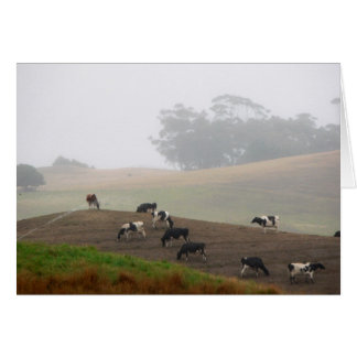 cows in the mist card