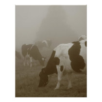 Cows in the mist flyer
