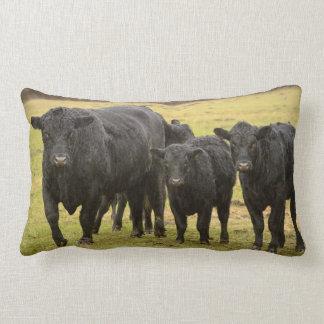 Cows in the rain lumbar pillow