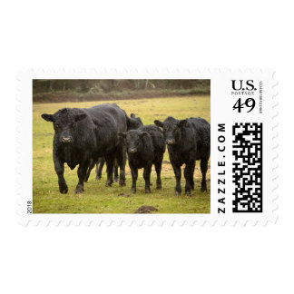Cows in the rain stamps