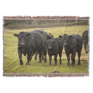 Cows in the rain throw