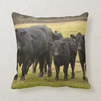 Cows in the rain throw pillow