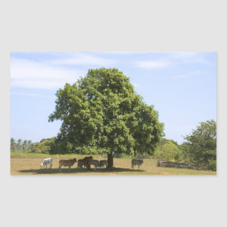 Cows in the Shade (3) Rectangular Sticker