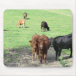 Cows in Wales Mouse Pad