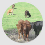 Cows in Wales Round Stickers