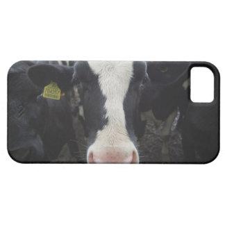 Cows iPhone SE/5/5s Case