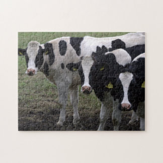 Cows Jigsaw Puzzle