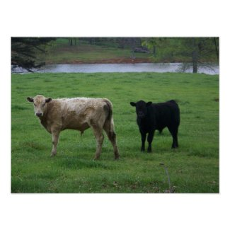 Cows Life print