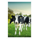 Cows love to stare customized stationery
