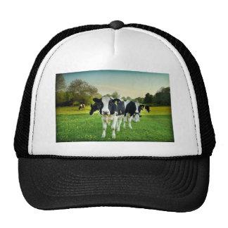 Cows love to stare trucker hats