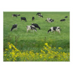 Cows, Meadow and Flowers Poster Print Gifts