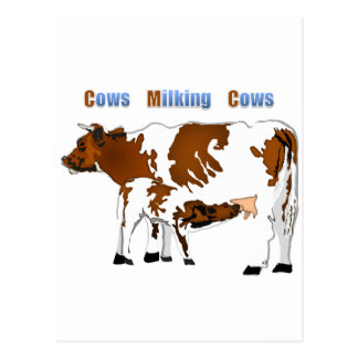 Cows Milking Cows Postcard