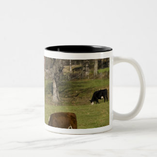 Cows on a farm in West Fairlee, Vermont. Blood Two-Tone Coffee Mug