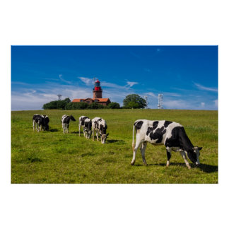 Cows on a meadow with lighthouse posters