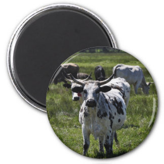 Cows on Big Meadow 2 Inch Round Magnet