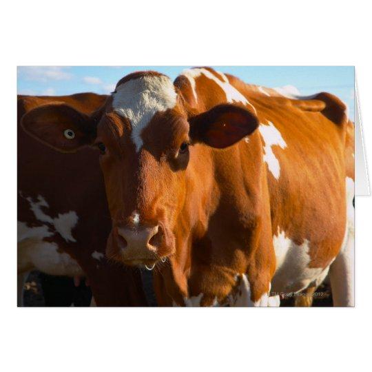Cows on farm card