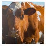 Cows on farm ceramic tiles