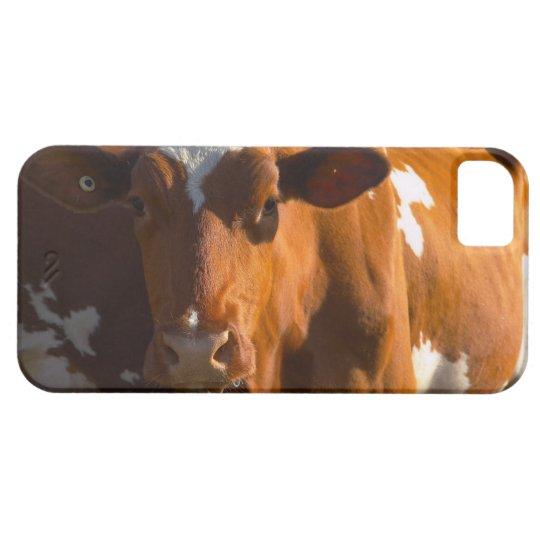 Cows on farm iPhone SE/5/5s case