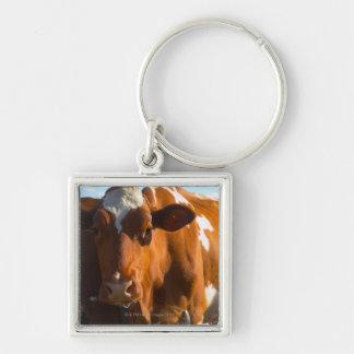 Cows on farm keychain