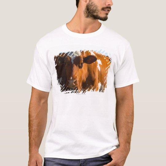 Cows on farm T-Shirt
