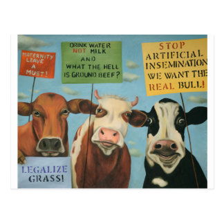 Cows On Strike Postcard