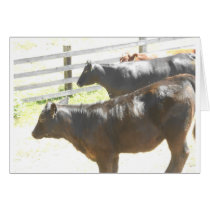 Cows on the Ranch Card