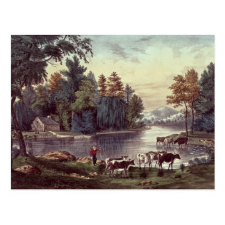 Cows on the Shore of a Lake Postcard