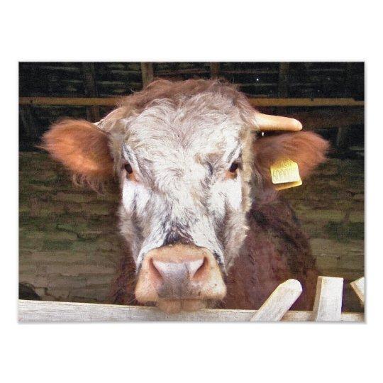 COWS PHOTO PRINT