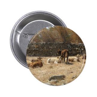 Cows Pinback Button
