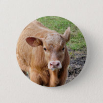 COWS PINBACK BUTTON